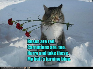 description funny poem funny chinese translations sum ting wong funny ...