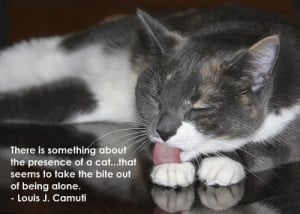 Famous Cat Quotes http://www.catclinicofcobb.com/site/view/195215 ...