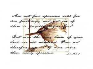 Tags bible verse scripture bird sparrow words writing