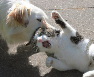 Funny Cats Fighting Dogs Pictures