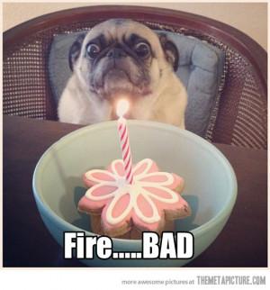 Funny dog birthday, dog birthday, colorful dog birthday