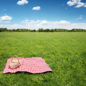 10 Perfect Picnic Supplies For National Picnic Day