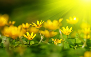 Yellow flowers sunshine Wallpapers Pictures Photos Images