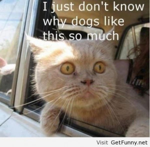 funny Cats just don't get it, Cats just don't get it