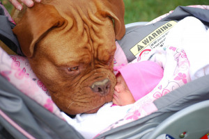 Dog meets baby for the first time!
