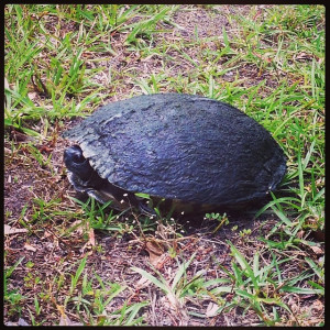 helped this slimy guy cross the road today. Around mile 18. #run # ...