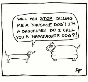 dogs funny pictures