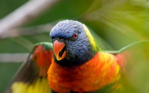 Colorful Bird Wallpaper