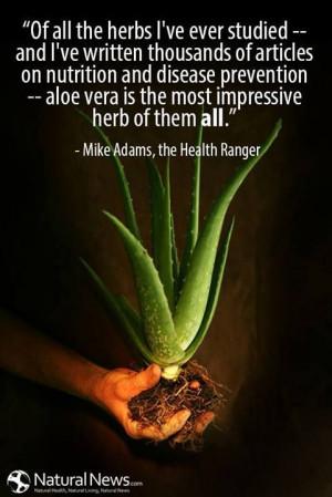 Aloe Vera, for human health and beauty www.diamondchris.myflpbiz.com