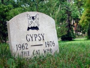 Symptoms of a Dying Cat