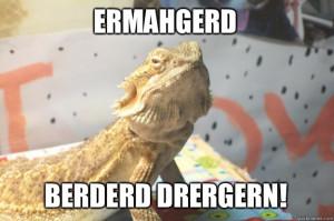 Bearded Dragon Blames You - ERMAHGERD BERDERD DRERGERN