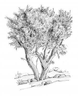 Related Pictures olive tree drawing people change quotes and sayings ...