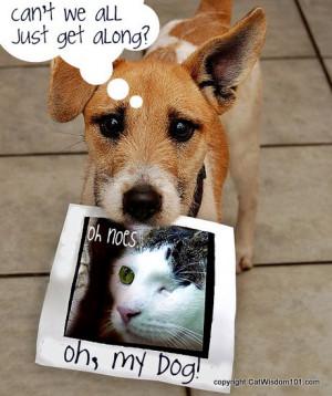 oh my dog-cat-funny-cat wisdom 101-vet 101