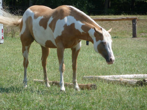 Short Cute Horse Quotes Image Search Results Quotekocom Picture