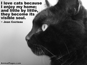 Love My Cat Quotes I love cats because i enjoy my