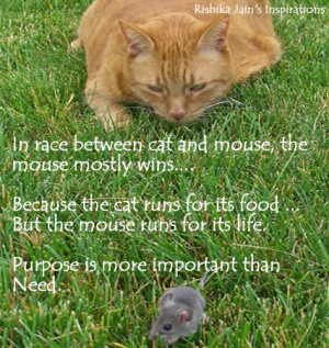 Purpose Quotes, Pictures, Survival Quotes - In race between cat and ...