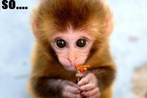 baby monkey wallpaper