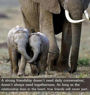 Elephant friendship