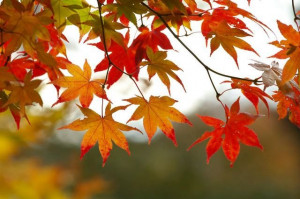 Celebrate the Fall Colors in Mackinaw City during the Annual Fall ...