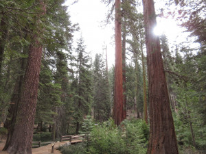 Delights of the Heart: Monday's Quotes, Magnificent Trees