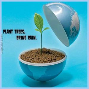Plant trees, bring rain ~ Environment Quote