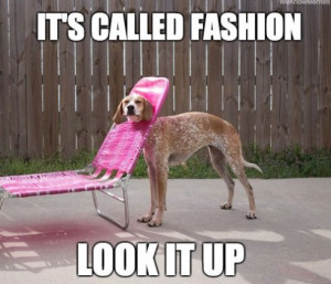 Funny Pictures 2014 Fashion Dog
