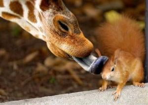 Funny Squirrel (9)