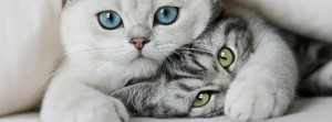 Sweet Cats Facebook Cover