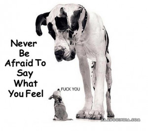 little dog tells a big dog how he feels about him