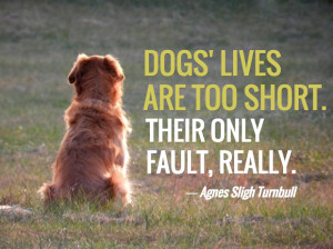 Love Dog Quotes Death