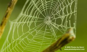 Spider Web, Weathersfield, VT
