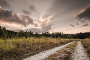 Daily Photo – An Old Dirt Road
