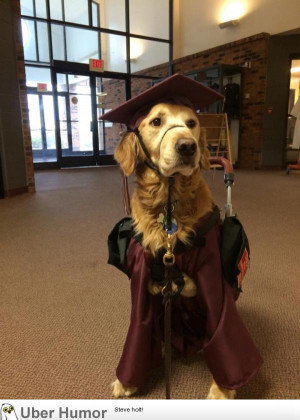 ... service dog in his graduation get-up. | Funny Pictures, Quotes, Pics