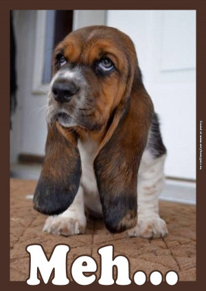 The world's most unimpressed dog