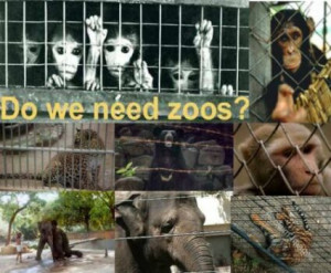 zoos he gives four reasons as to why individuals might go to zoos ...