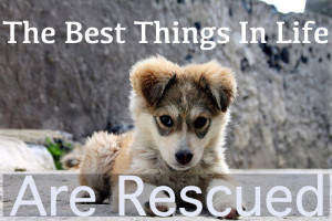 "11. ""Rescued dogs make people happy!"