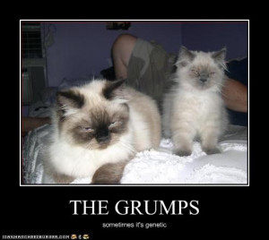funny-pictures-kittens-are-grumpy