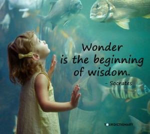 Wonder is the beginning of wisdom.
