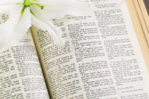 lily open bible with lily free stock photography images download