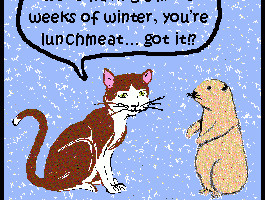 groundhog-day-funny-quotes-3.jpg