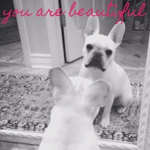 Quote: you are beautiful! French Bulldog