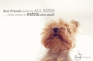 Little Dog Quotes