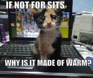 Cat-Humor-Bengal-Cat-Jokes~~element84.jpg