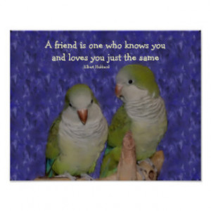 Quaker Parrot Pair Friendship Quote Poster