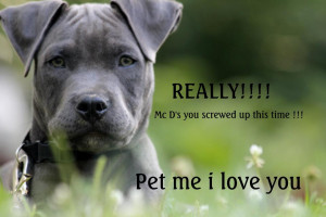 Here are a TON of photos of pit bulls with their letters of protest to ...