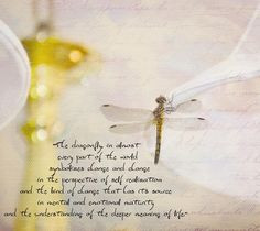 Dragonfly Quotes | am linking to Pink Saturday. Bev from How Sweet The ...