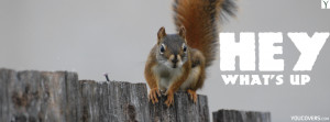 ... quotes / fb covers photo for timeline - HEY WHAT'S UP - funny squirrel