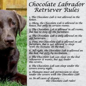 Chocolate Lab Rules Sweatshirt by dakotasden