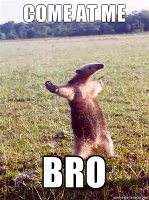 funny come at me bro animal Pictures (16)