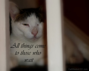 sweet cat quotes